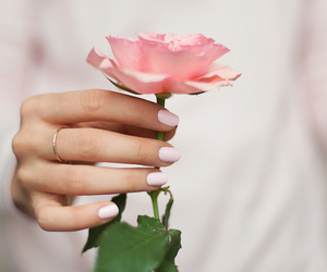 pink, beautiful, and flower image