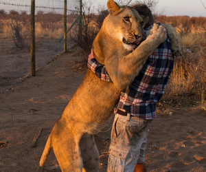 awn, lion, and love image