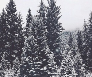 christmas trees and snowy trees image