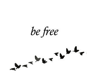 be free, birds, and lovely image