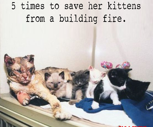 animals, hero, and cats image