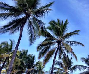 beach, brazil, and beaultiful image
