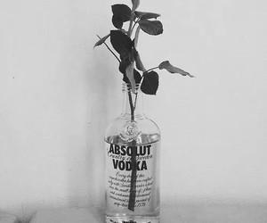 vodka image