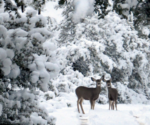 december, snow, and animals image