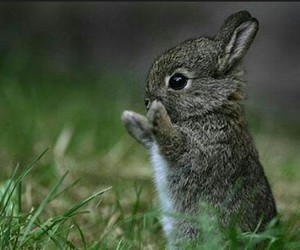 happy, tiere, and hase image