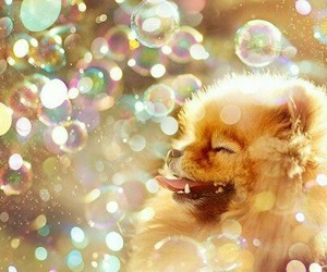sun, bubles, and dog image
