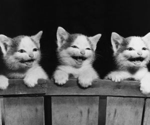cats smile image