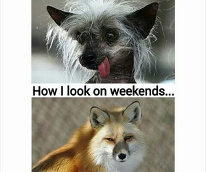 funny, weekand, and weekdays image