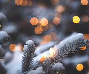 december, pine, and snow image