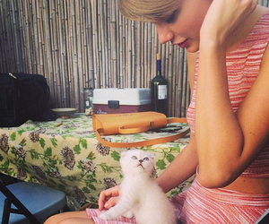 cat, Taylor Swift, and cute image