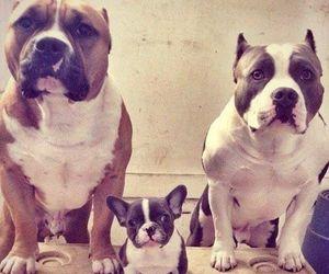 dog and pitbull image