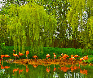 color, flamingos, and spring image