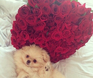 rose, dog, and cute image