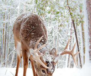 winter, snow, and animal image
