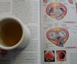 biology, verarostova, and exam image