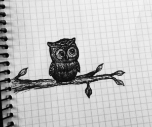 drawing, owl, and sketch image