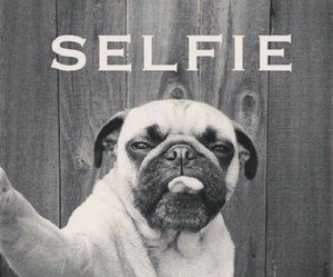 pug, tounge, and selfie image