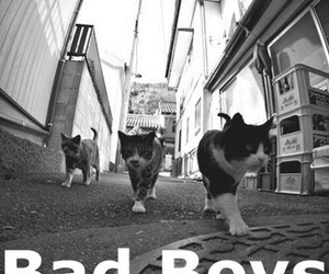 bad boys, cat, and street image