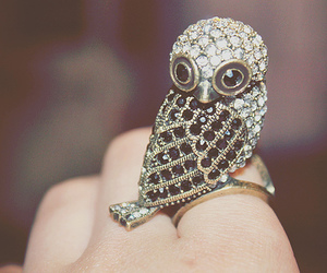 owl and ring image