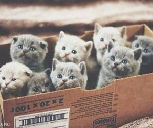 box, kittens, and cute image