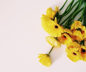 flower, gerbera, and yellow image