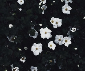 flowers, white, and black image