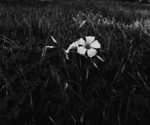 alone, daisy, and lonely image