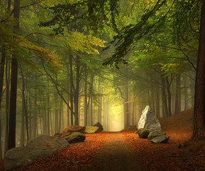 bavaria, trail, and fall image