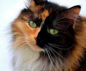 beautiful and cat image