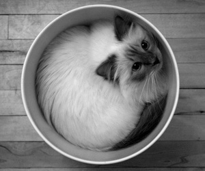 black and white, bucket, and cat image