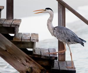 bird and beach image