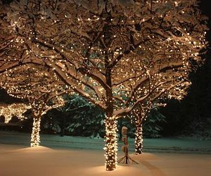 lights, nature, and snow image
