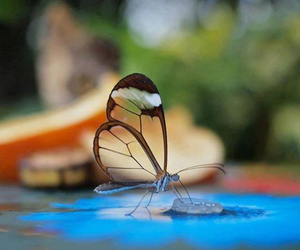butterfly, nature, and amazing image