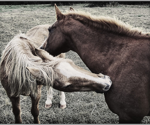 horse, horses, and ponies image