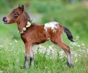 horse, foal, and adorable image