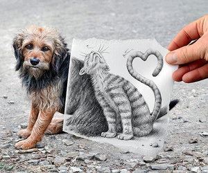 dog, cat, and drawing image