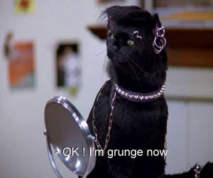 grunge, cat, and black image