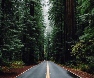 beautiful, forest, and tumblr image