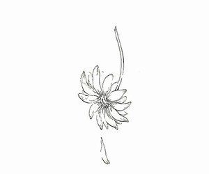 flower, drawing, and sad image