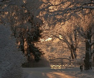 snowy, trees, and rays of sun image