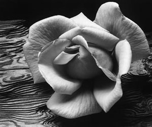 ansel adams, black and white, and photography image