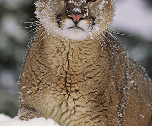 snow, animals, and winter image