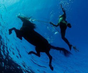 animals, horses, and underwater image