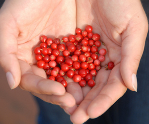 autumn, berries, and hands image