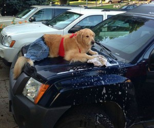 dog, xp, and funny image