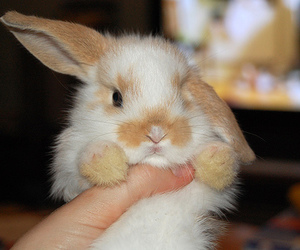 awn, bunny, and lovely image