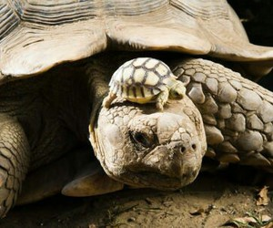 turtle, baby, and animal image