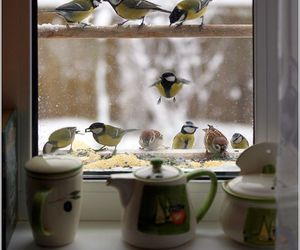 bird, winter, and window image