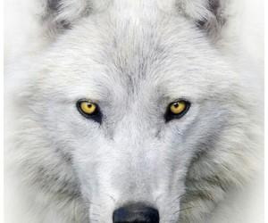 beautiful, teen, and white image