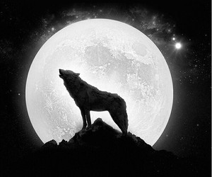 moon and wolf image